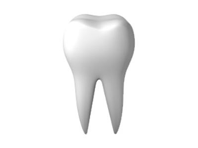 歯の大切な役割